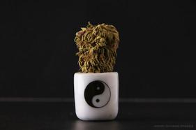 Group 2, Puzzle 09 - Cannabis Yin Yang