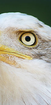 eagle 02 08-07.jpg