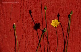 Group 1, Puzzle 09 - Flower and Red Wall