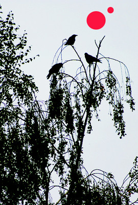 Three Crows on a Distant World