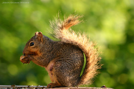 Group 1, Puzzle 17 - Squirrel