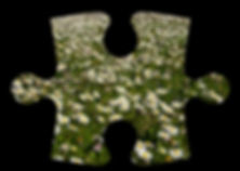 Group 3 puzzle piece image.jpg