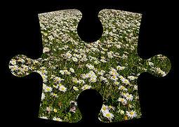 Group 3 puzzle piece image.jpg