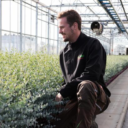Jan Keysers mit den Eucalyptus gunnii Azura