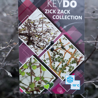 Unsere Keydo Zick Zack Collection