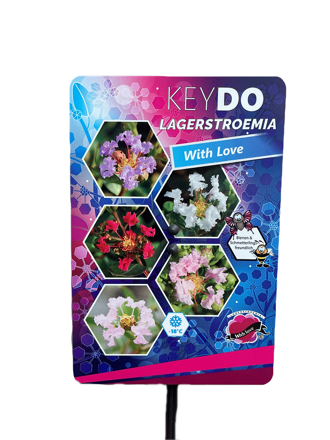 Lagerstroemia Vorderseite_edited.png