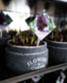 Zwiebelpflanzen (6 von 6).jpg