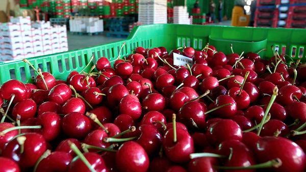e sector frutícola y hortícola- APLICACI