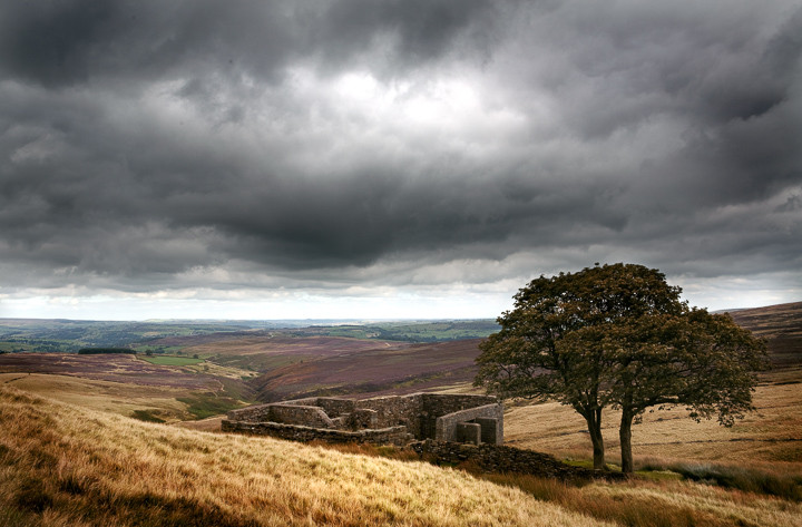 Landscape photo of a ruined building and a tree under a cloudy sky