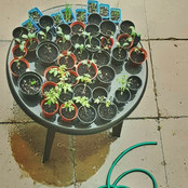 Eleven98 seedlings