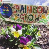 Rainbow Grow