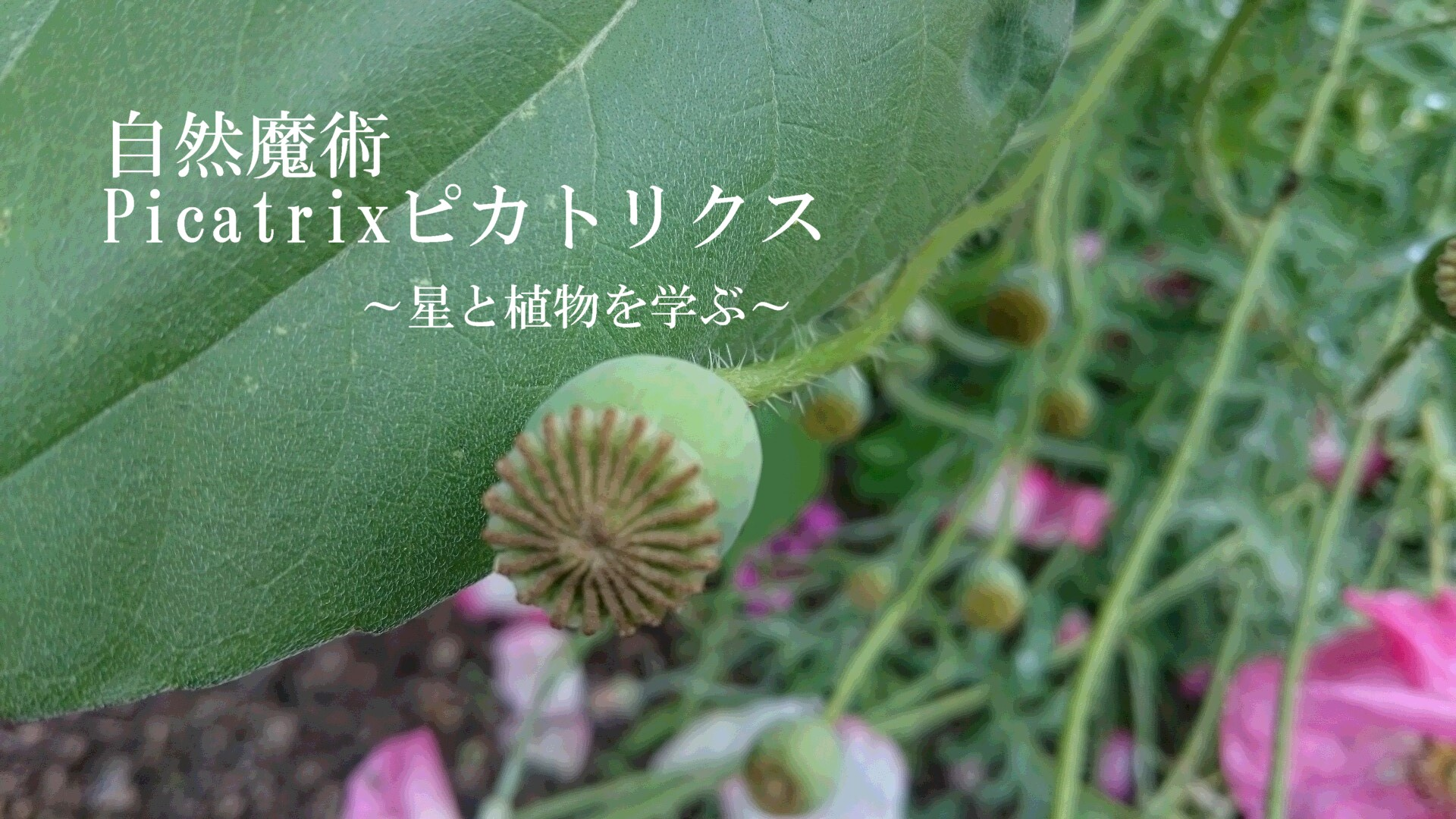 ~星と植物を学ぶ~自然魔ピカトリクス講座 【終了】