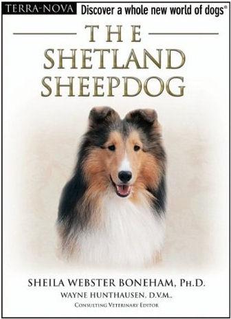 Shetland Sheepdog - Boneham