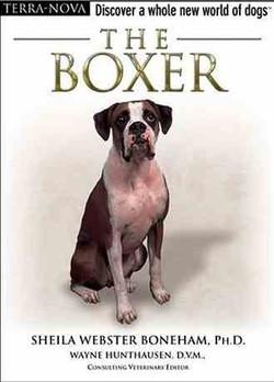 The Boxer - Boneham