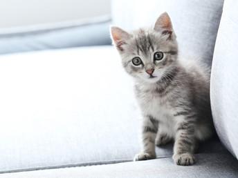 El gato ideal según tu signo del zodiaco 3ra parte