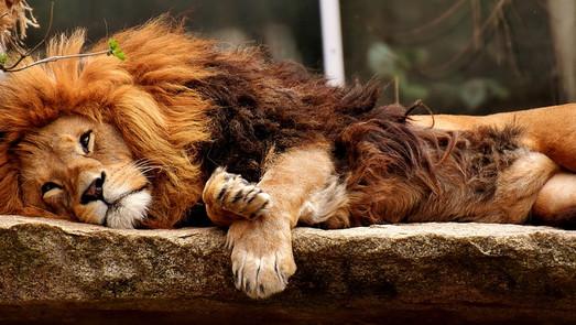 ¡Combate el insomnio y embellece!
