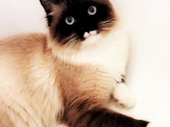 La enigmática magia de los gatos