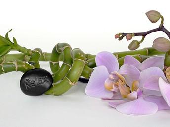 Descubre las plantas mágicas… Sanan, protegen y enamoran 365 días