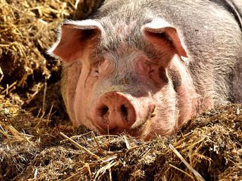 La lectura de las emociones… Muy cerca ¿para los animales?