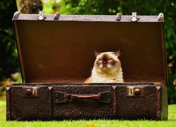 Vacaciones a la vista Empaca tu maleta como todo un minimalista Parte 1