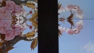Miroirs du temps