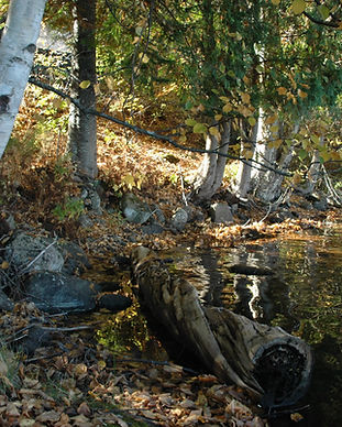 Bark lake shoreline.jpg