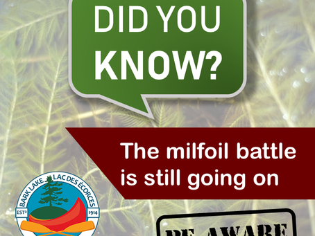 Did you know… the milfoil battle is still going on?
