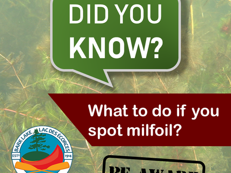 Did you know… what to do if you spot milfoil?