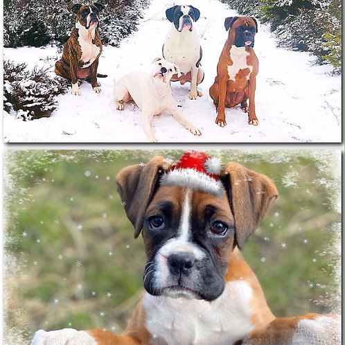 Boxer Rescue Christmas Cards