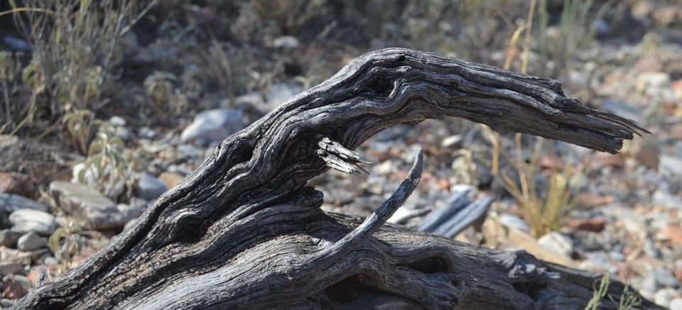 Lizzie Ochoa-Driftwood