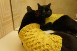 Bejuled_Cat2