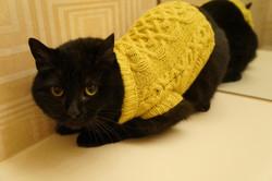 Bejuled_Cat1