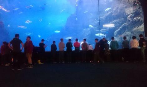 151127 Aquarium