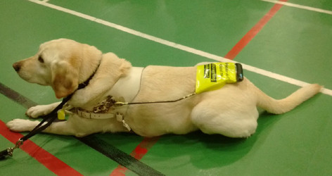 170929 Guide Dog