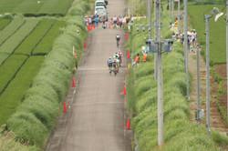茶畑をロードレース会場に