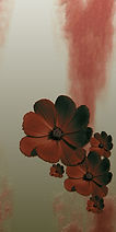 blumen-tapete-erida-01d-300.jpg