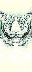 tiger2ae3-216-300.jpg