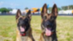 dog training dogs