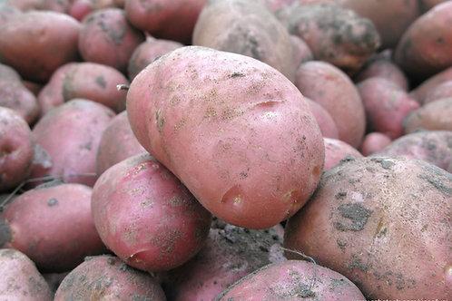 Potato Per Kilo