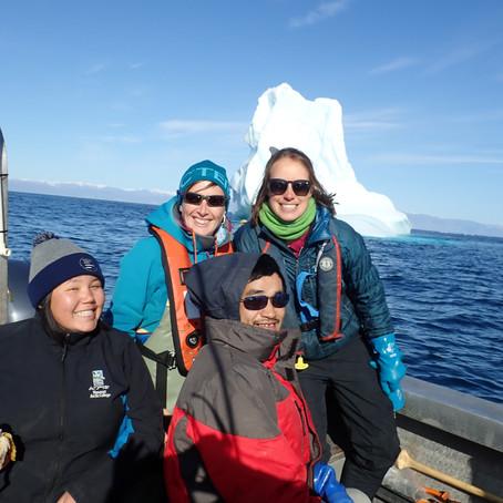 Incoming icebergs!