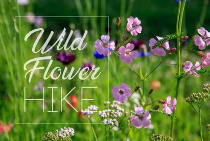 A NATURE ADVENTURE | Wildflower Hikes Offered In Kane County this Spring