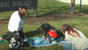 REUNITED & IT FEELS SO GOOD | DuPage Animal Services Reunites Dog, Owner Separated for Three Years