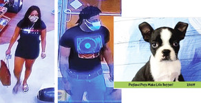 PUPPY THIEVES | Naperville Crime Stoppers Offering $1,000 Reward for Information Leading to Arrest