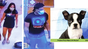 PUPPY THIEVES   Naperville Crime Stoppers Offering $1,000 Reward for Information Leading to Arrest