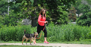 MORNING WITH YOUR MUTT | New Pet Event to Debut June 20 In St. Charles