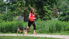 MORNING WITH YOUR MUTT   New Pet Event to Debut June 20 In St. Charles