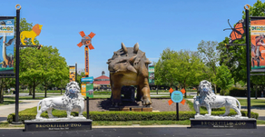 FREE ADMISSION | Visit Brookfield Zoo for Free on Select Days In October, November & December