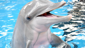 GOODBYE MAGIC | Chicago Zoological Society Mourns Loss of Bottlenose Dolphin