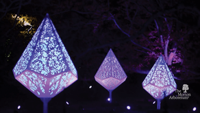 EXPANDED IN 2020 | Illumination: Tree Lights at The Morton Arboretum