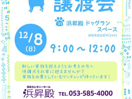 保護犬譲渡会を開催します。